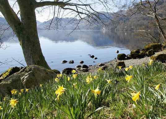 Wordsworth daffodils, a picture of the scene that inspired William Wordsworth to write his poem.